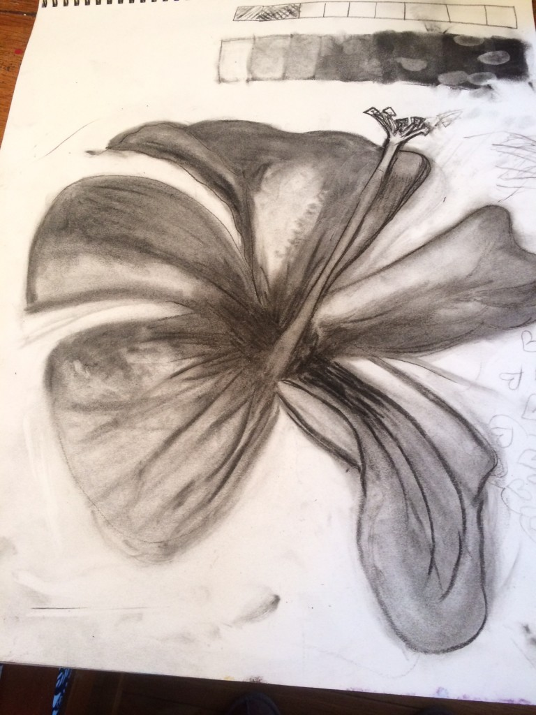 drawing shading hisbiscus flower 8th grade art