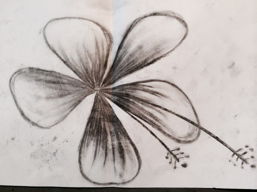 charcoal hisbiscus flower, 8th grade art
