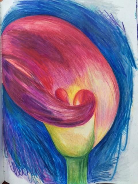 Calla Lily colored pencil drawing