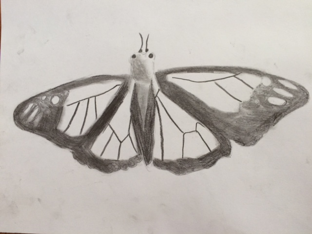 butterfly Nature Lab Sketches