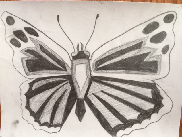 butterfly Nature Lab Sketch